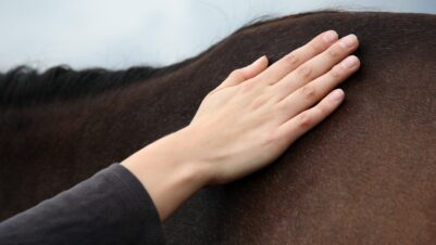 Hand on horse