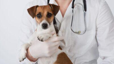 vet in white coat holding dog
