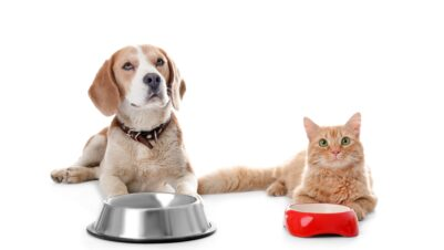 cat and dog waiting for food