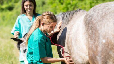 vet examining horse with stethoscope