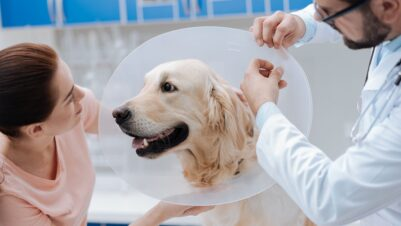 vet and client treating dog with Elizabethan collar