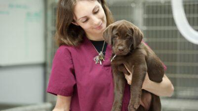 vet holding dog