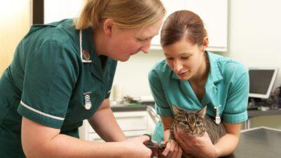nurses treating cat